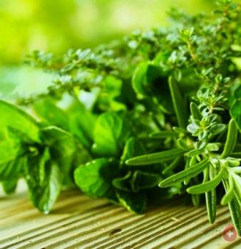 Травы очищающие организм от шлаков и токсинов
